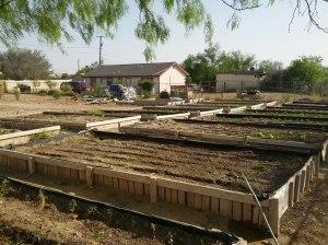 Jardines comunitarios